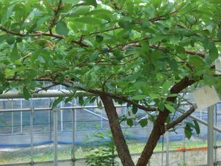 20120530貴陽s.JPG
