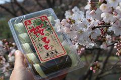 20190329桜と元祖みどりの桜もち.jpg